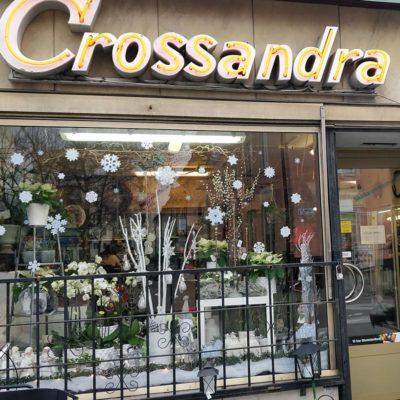 crossandra blommor norrort