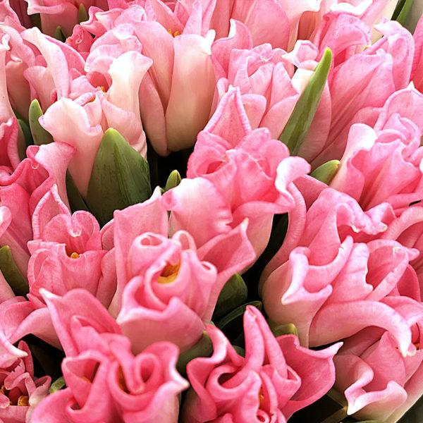 Rosa Tulpan hos Crossandra Blommor i Spånga