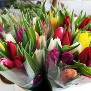 Färgglada tulpaner hos Crossandras Blommor