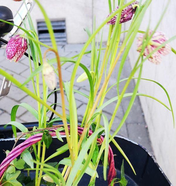 Plantering av vårblommor